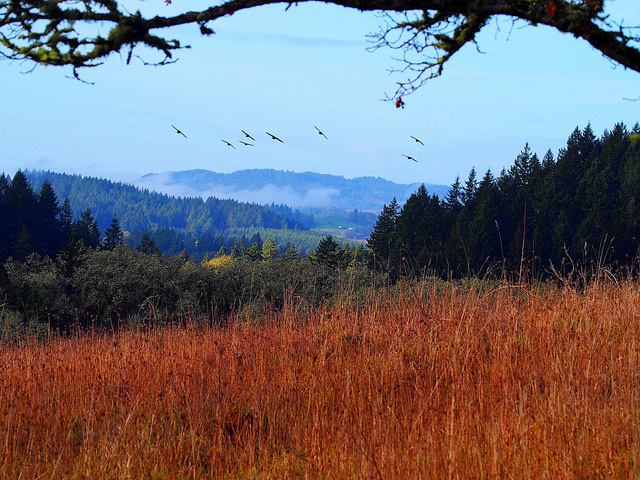 Birds_Fields_Pisgah