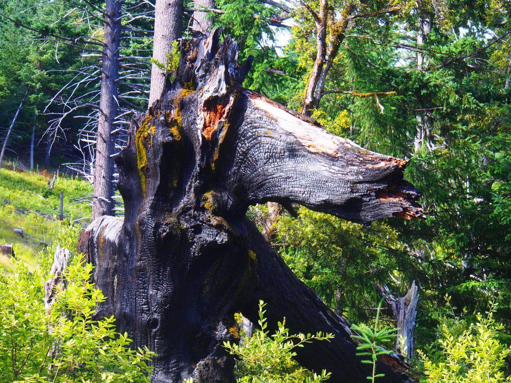We found the Fire Monster at Packer's Cabin on the Prairie Lookout Road. He is the most obvious candidate for having drawn down that first lightning strike!