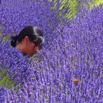 Beautiful Stranger in the lavender fields