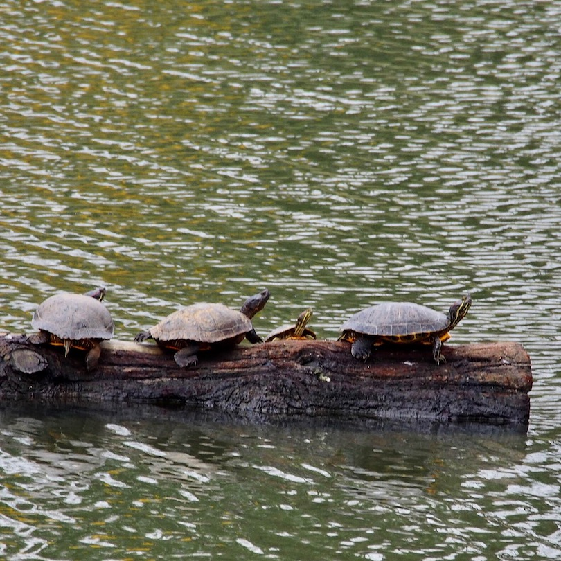 Turtles All the Way Down