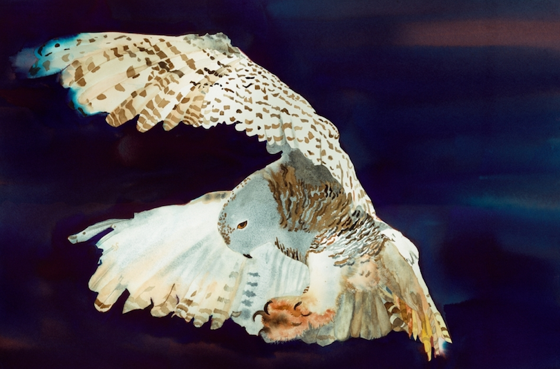 My sister Cheryl Long, became a painter; this is her Snowy Owl.