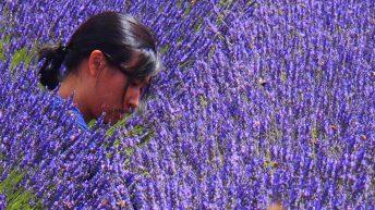Beautiful Stranger in the lavender fields