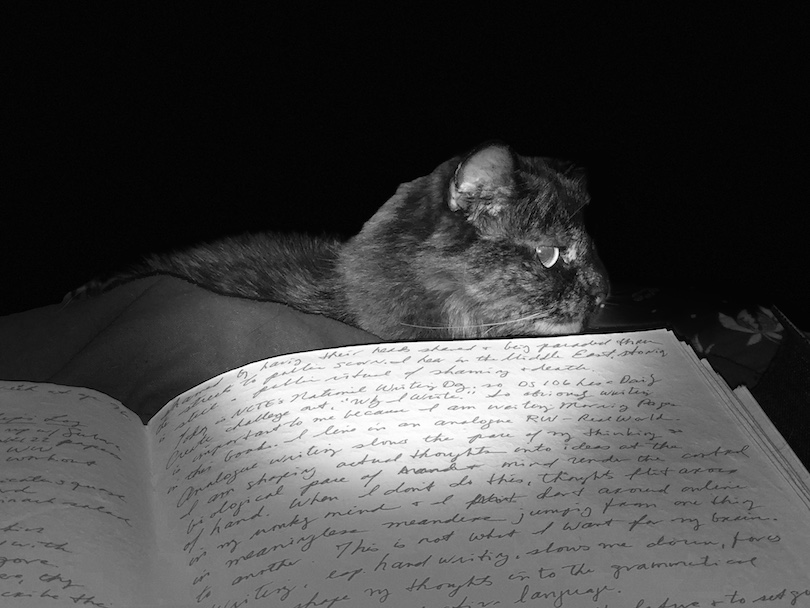 Pookie, our tortoiseshell cat, watches over my Morning Pages in the Great Book
