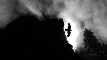 Raven Over Tidbits Mountain